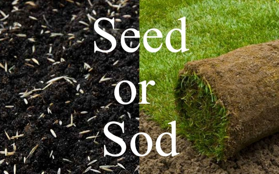 Grass seed or sod