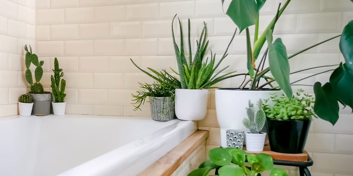 terracotta-vs-ceramic-which-is-better-houseplants-in-bathroom