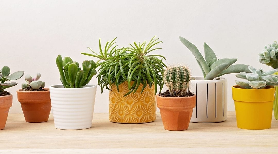 Terracotta vs. Ceramic Pots: Which is Better for Your Houseplants?