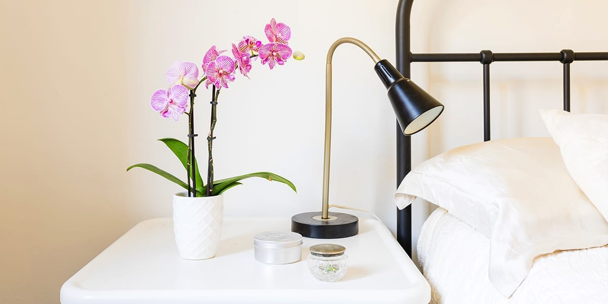 caring-for-orchids-pink-orchid-next-to-bed