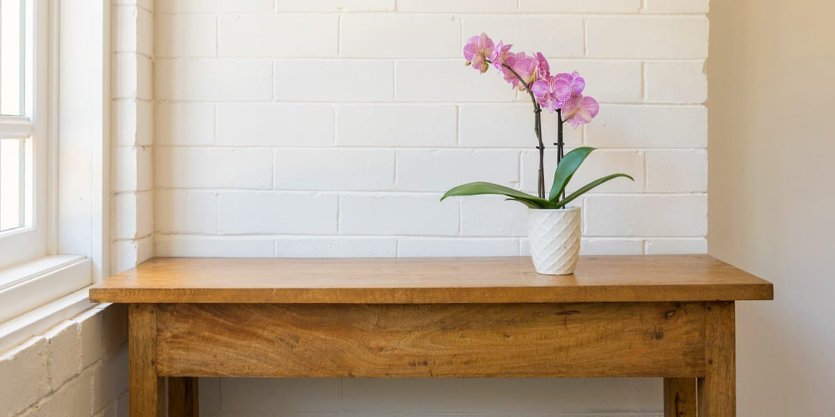 caring-for-orchids-pink-orchid-on-desk-white-brick