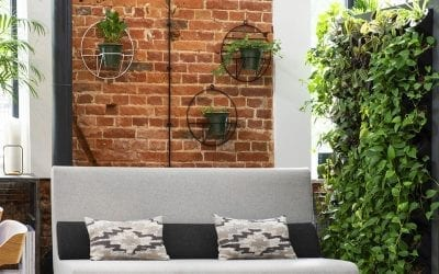 Create a Vertical Green Wall with Houseplants
