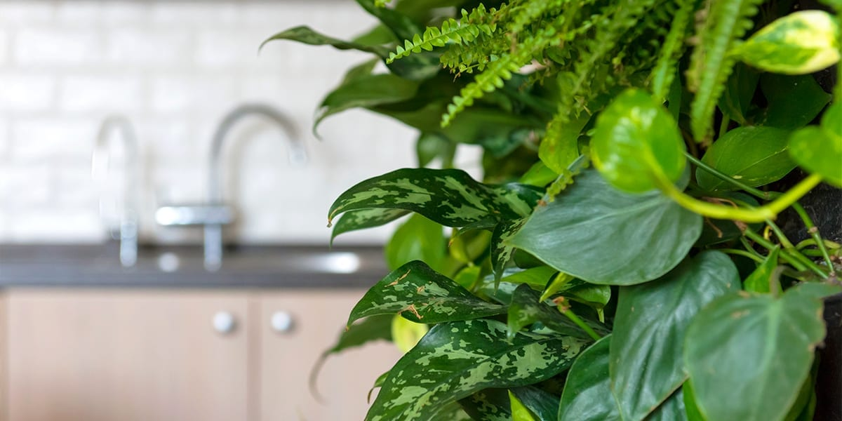 creating-a-vertical-garden-living-wall-in-kitchen-up-close