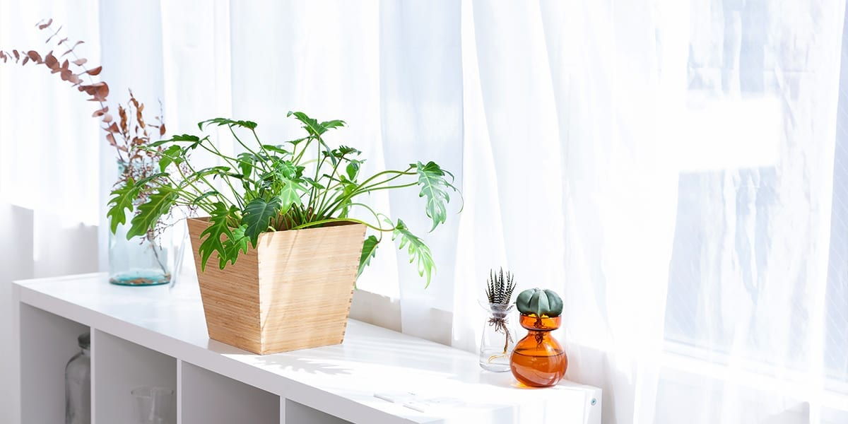 maximize-space-window-houseplants-houseplants-on-shelf-white-curtains