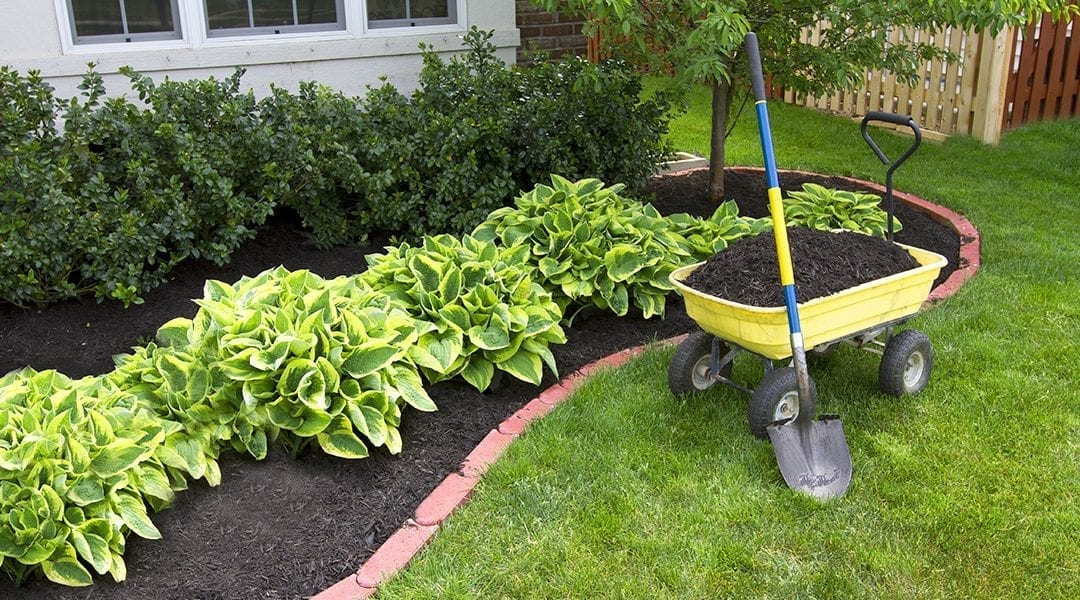 Give Dad a Break! DIY Landscape Improvements