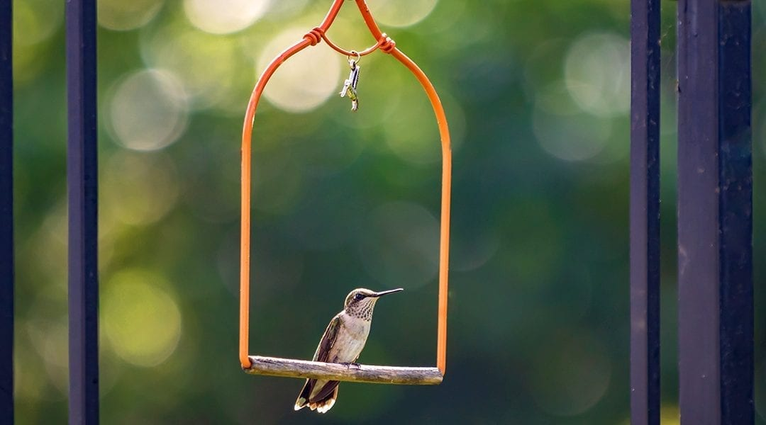 Make Friends with a Hummingbird! Fun Ideas for Kids